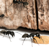 5 WAYS TO STOP ANTS COMING INTO YOUR HOME